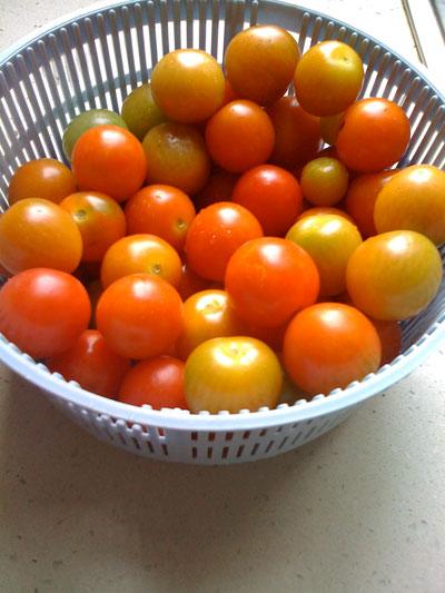 Raccolta pomodori