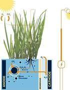 energia dalle piante