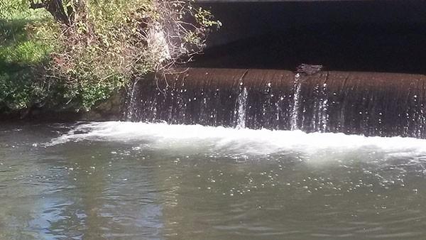 coscienza ambientale monitoraggio fluviale